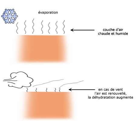 Déshydradation de la peau beaucoup plus rapide en cas de vent